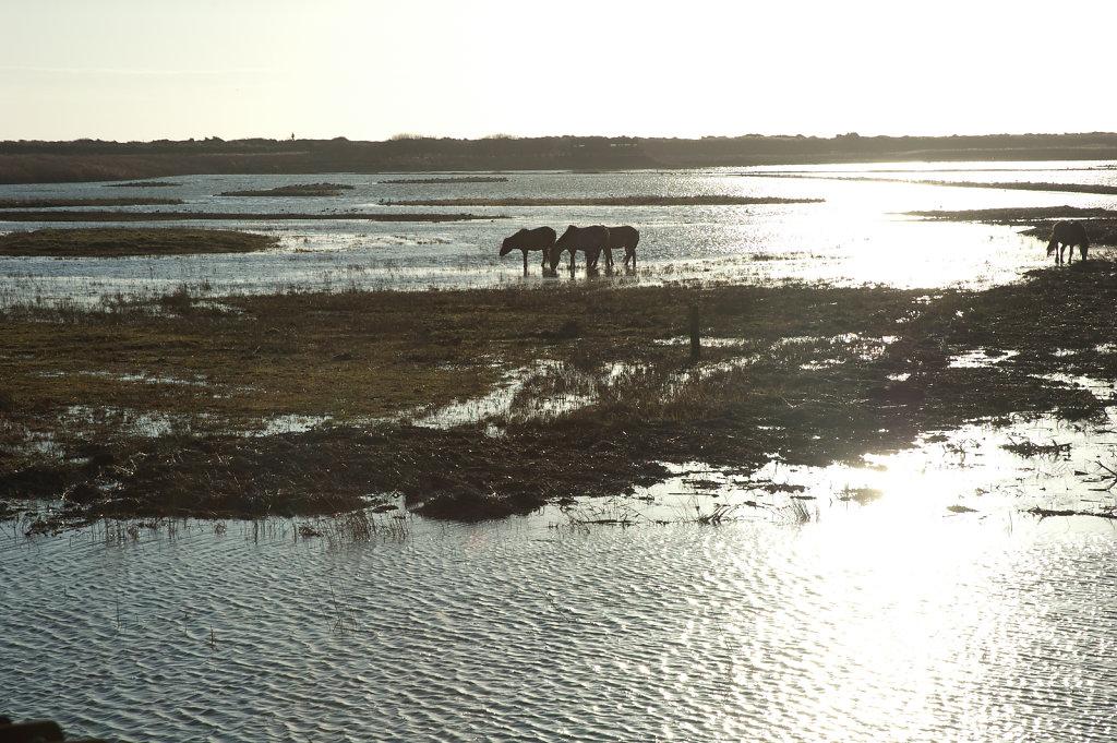 Horses at Minsemere