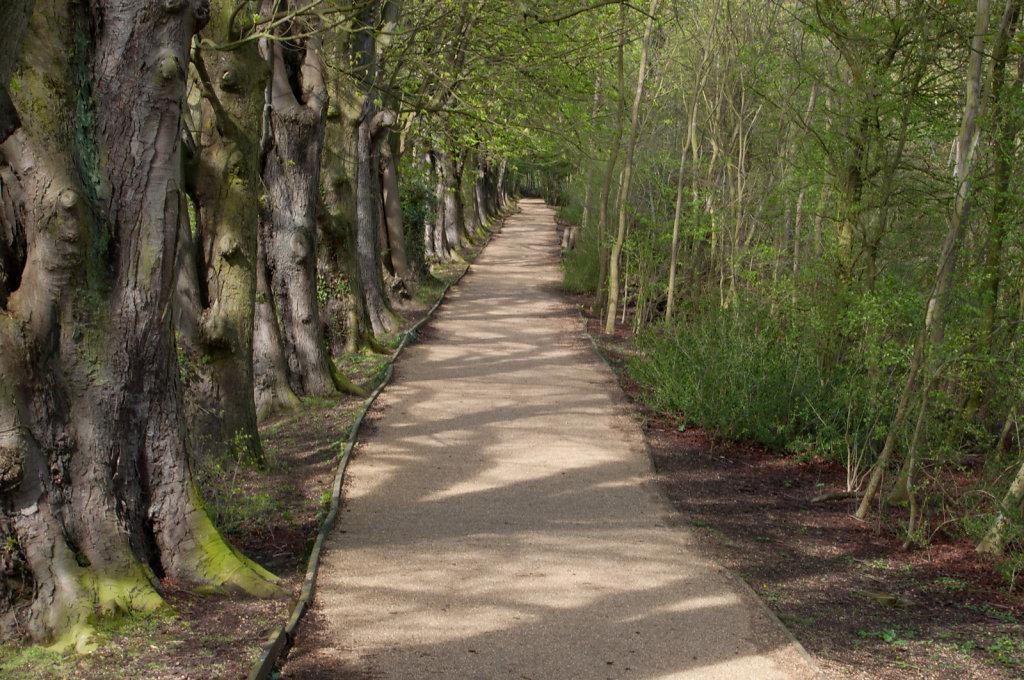 Path in Hinchingbrooke Park