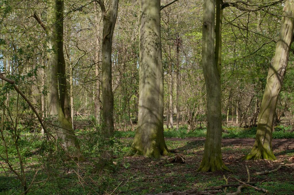 Trees in Hinchginbrooke Park