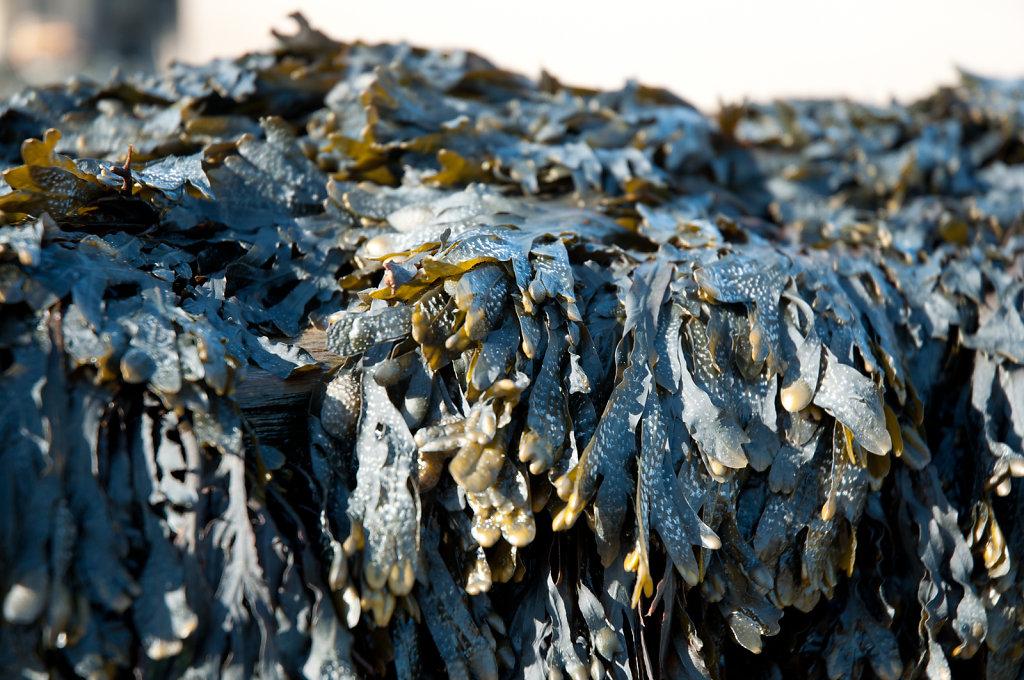 Seaweed at Overstrand