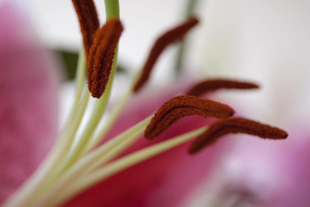 Flower stamen