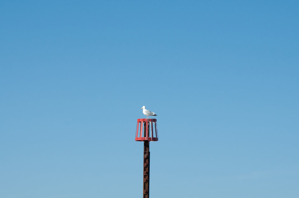 Gull at Overstrand