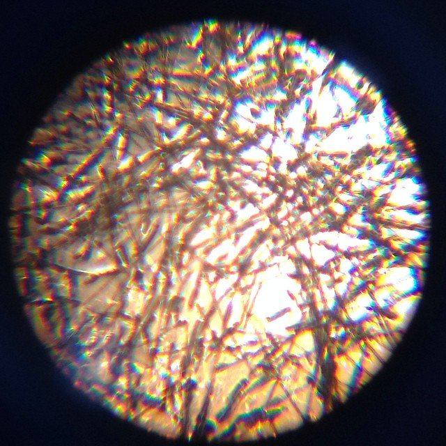 Picture of wool taken through a microscope