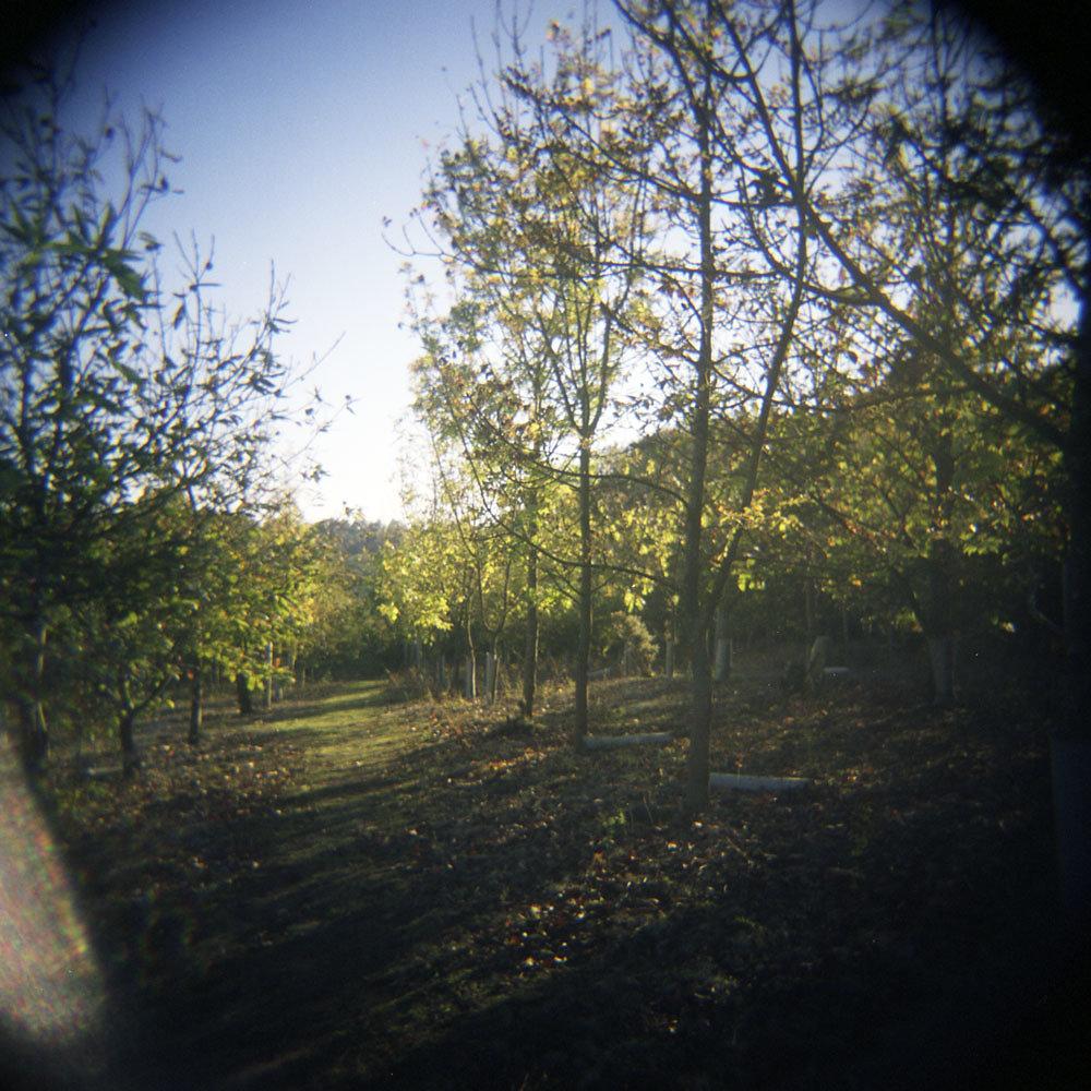 Queen's Hills 2012